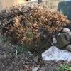 Winter form Dec. in Cabarrus Co.