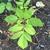 leaves, Wilson Botanical Garden, Wilson County, NC