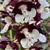 Flower Close Up (Wake County, NC)