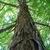 Shaggy bark (Guilford County, NC)-Early Fall