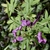 Flower & Seedpod- Aug. 16, Warren Co., NC
