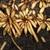 Root tubers (Philadelphia, PA)-Mid Fall