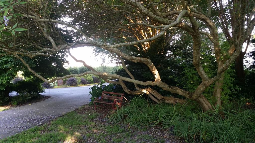Branch form