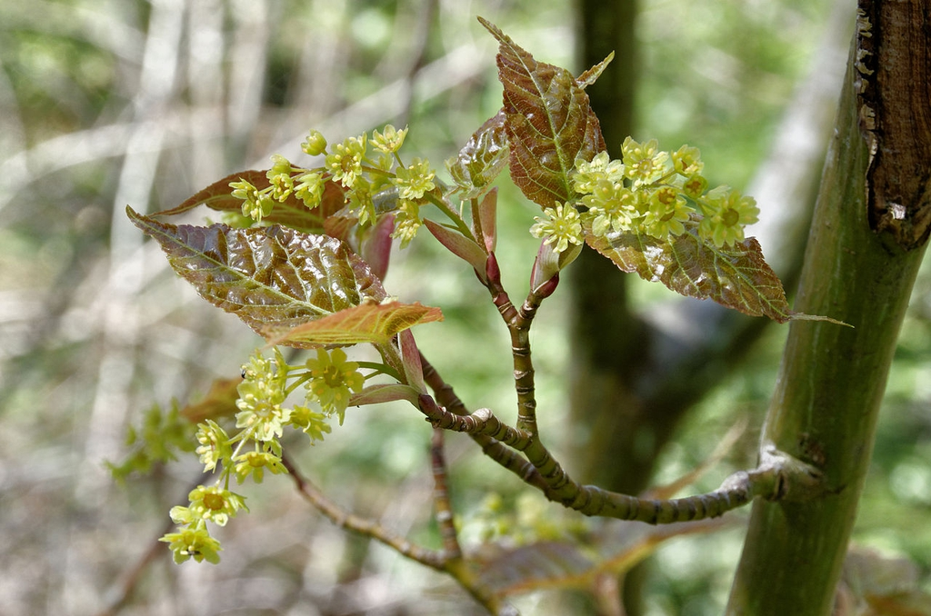 Young leaves and flowers