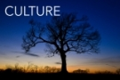 CULTURE. Effective leaders create vibrant, deeply rooted cultures. It takes time, energy and honesty. To create a vibrant culture, we help you build a winning environment, coach leaders and connect the workplace to the marketplace.