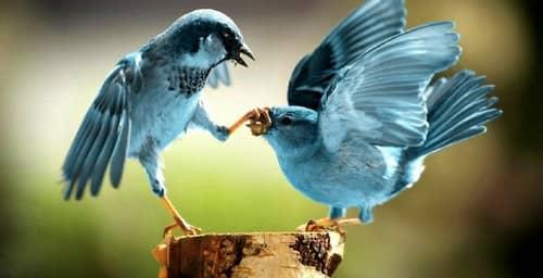 Desactiva la confirmación de lectura de los mensajes privados de Twitter