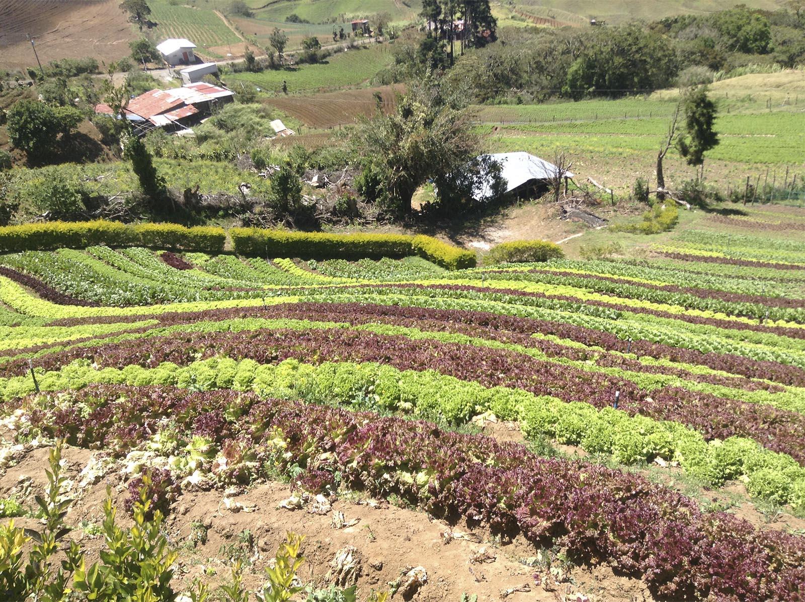 Semana Rural En Latinoamérica Sí Hay Agricultura Eficiente Es Orgánica Y No Extensiva