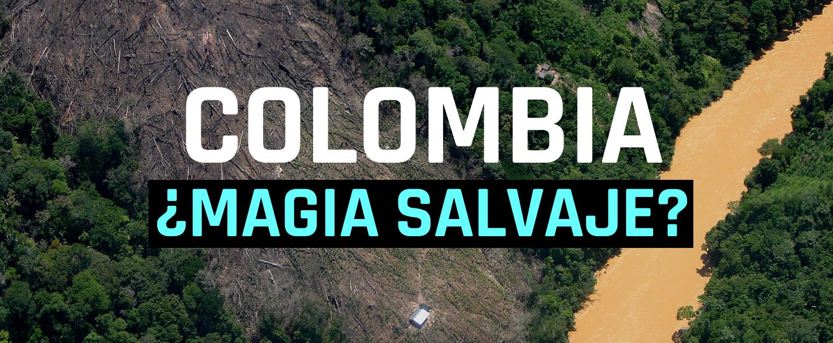 Estas son las siete zonas de deforestación más preocupantes en Colombia