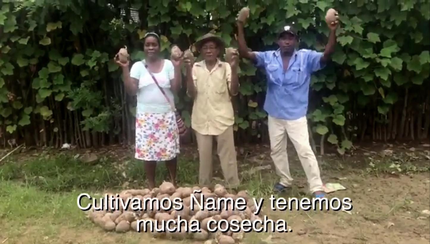 La historia detrás de los productores de ñame que se volvieron 'youtubers'