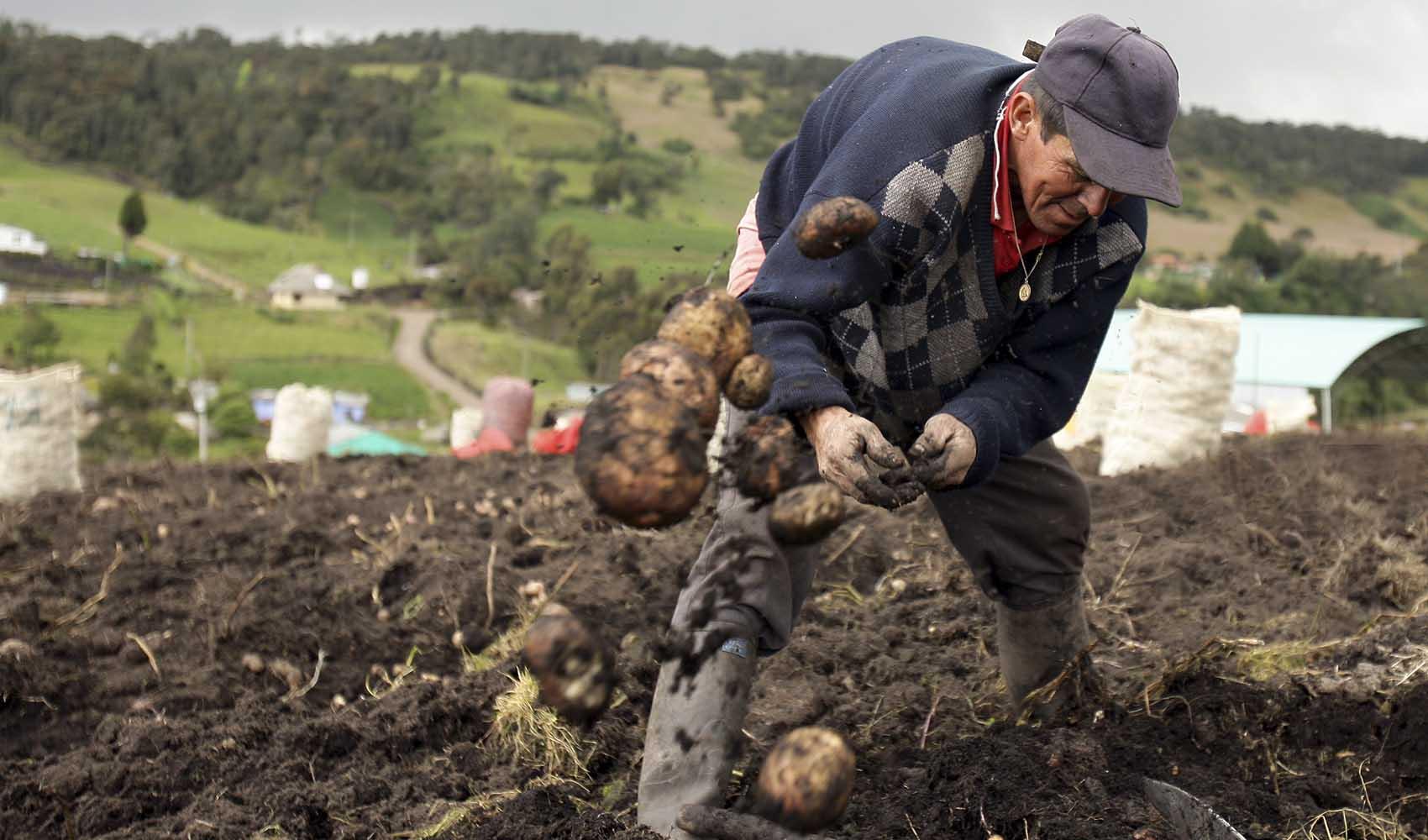 Los campesinos bogotanos que revivieron la comida ancestral