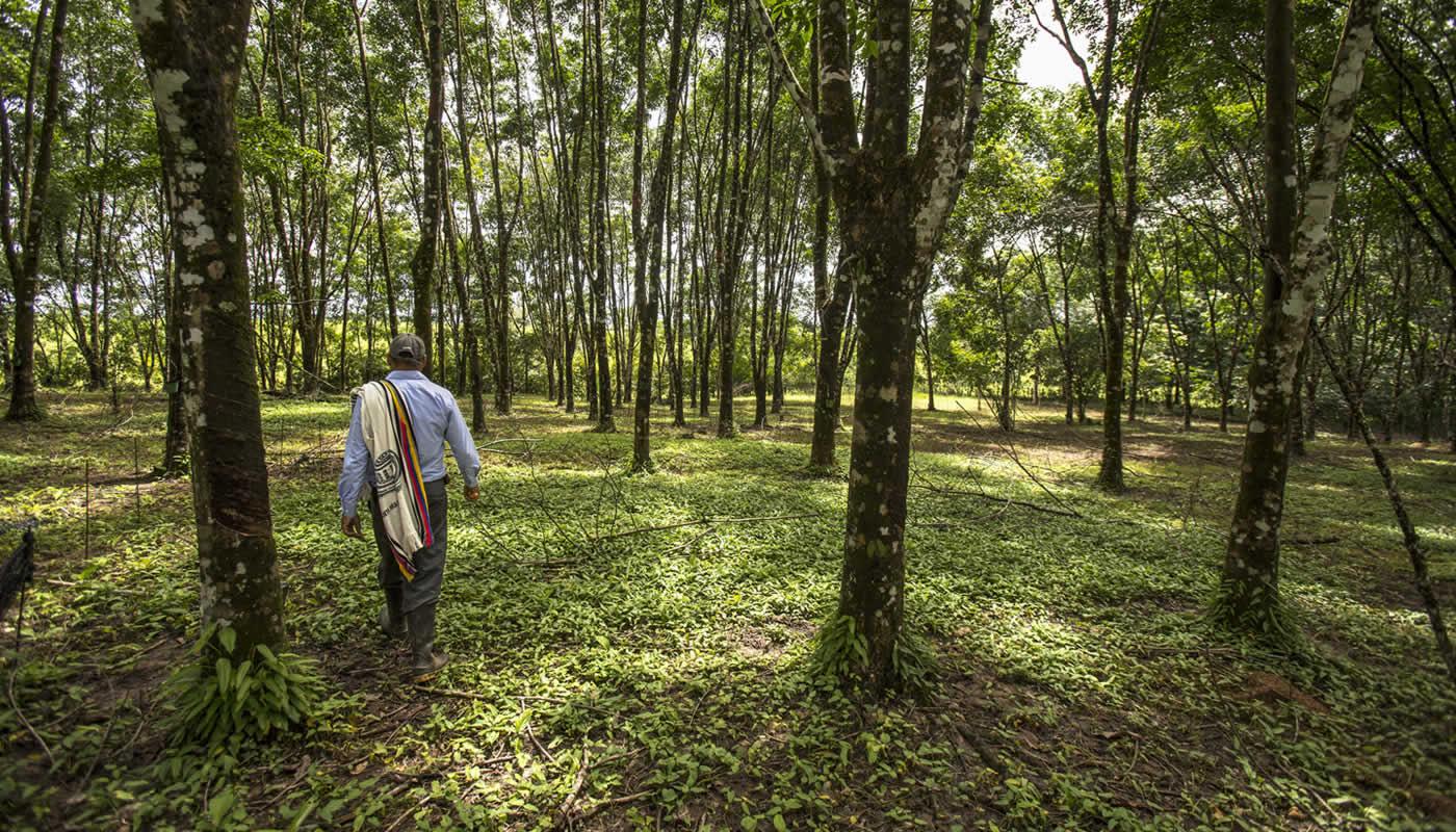 Así se están definiendo los próximos 10 años del campo en Colombia