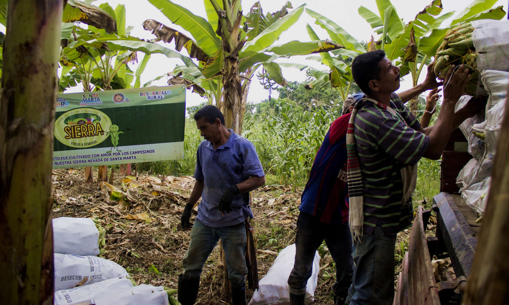 El agro en Colombia sí está despegando (pero no para todos)
