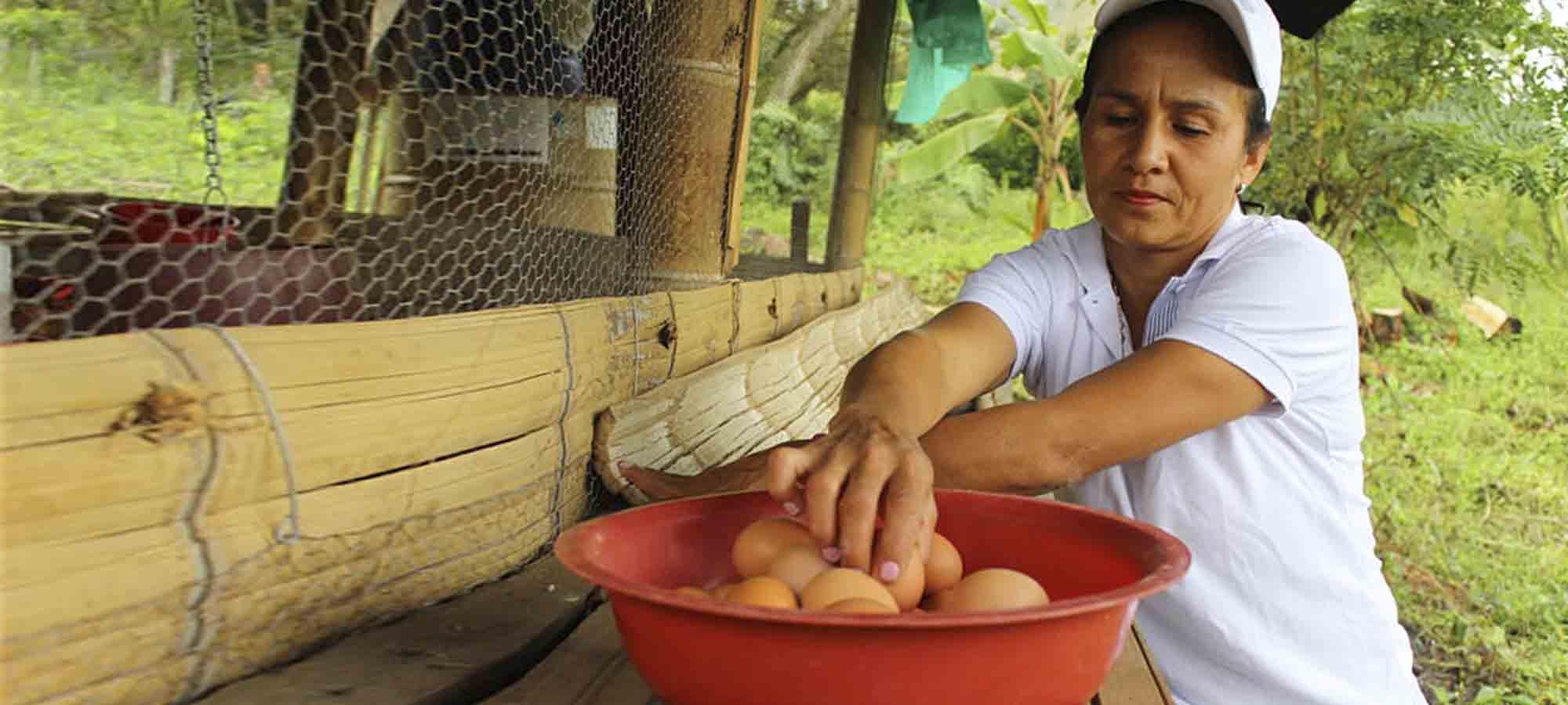 Las campesinas del Valle del Cauca que quieren ser empresarias
