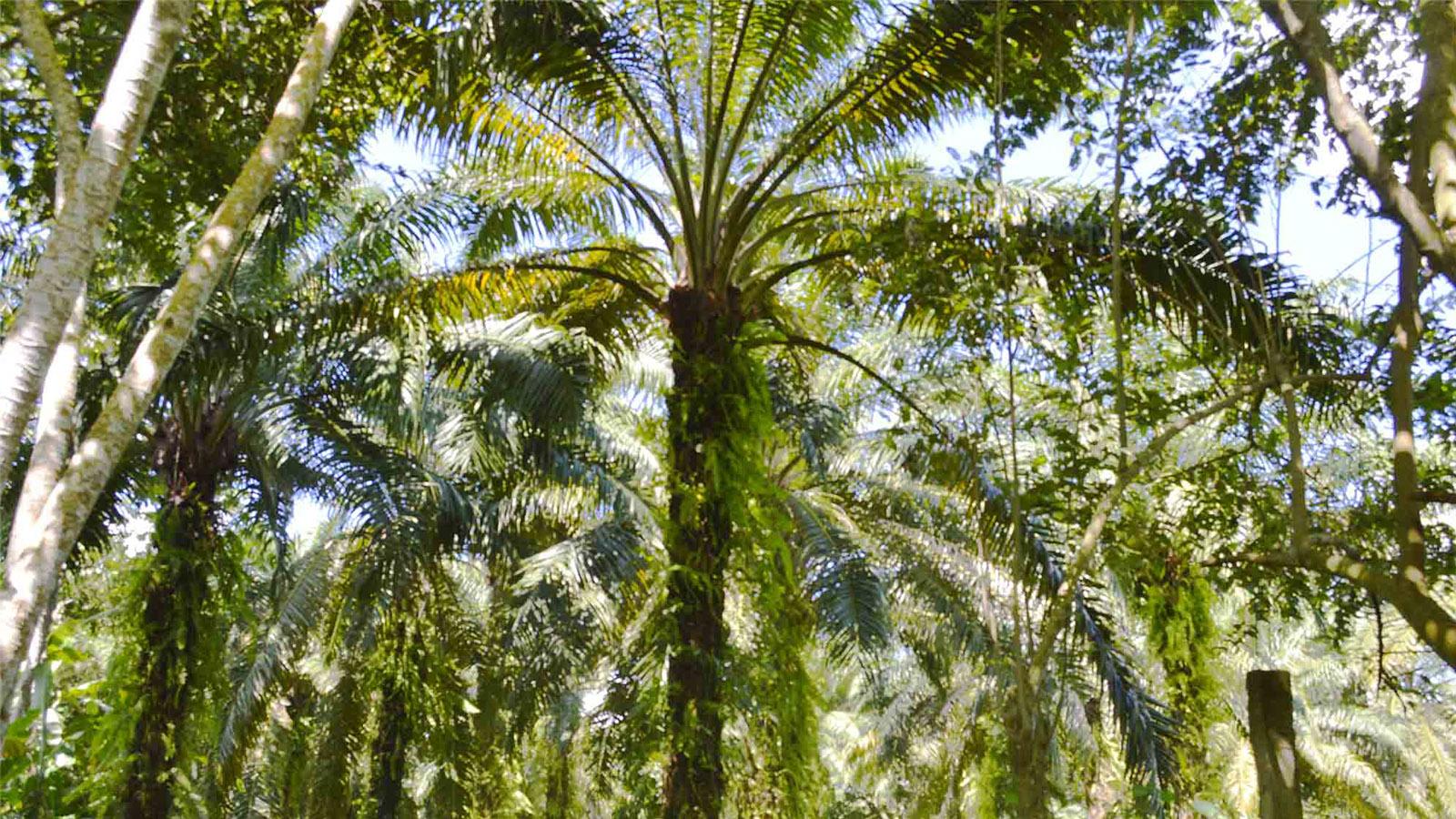 No solo cultivamos palma: el lema de los pequeños productores en María La Baja