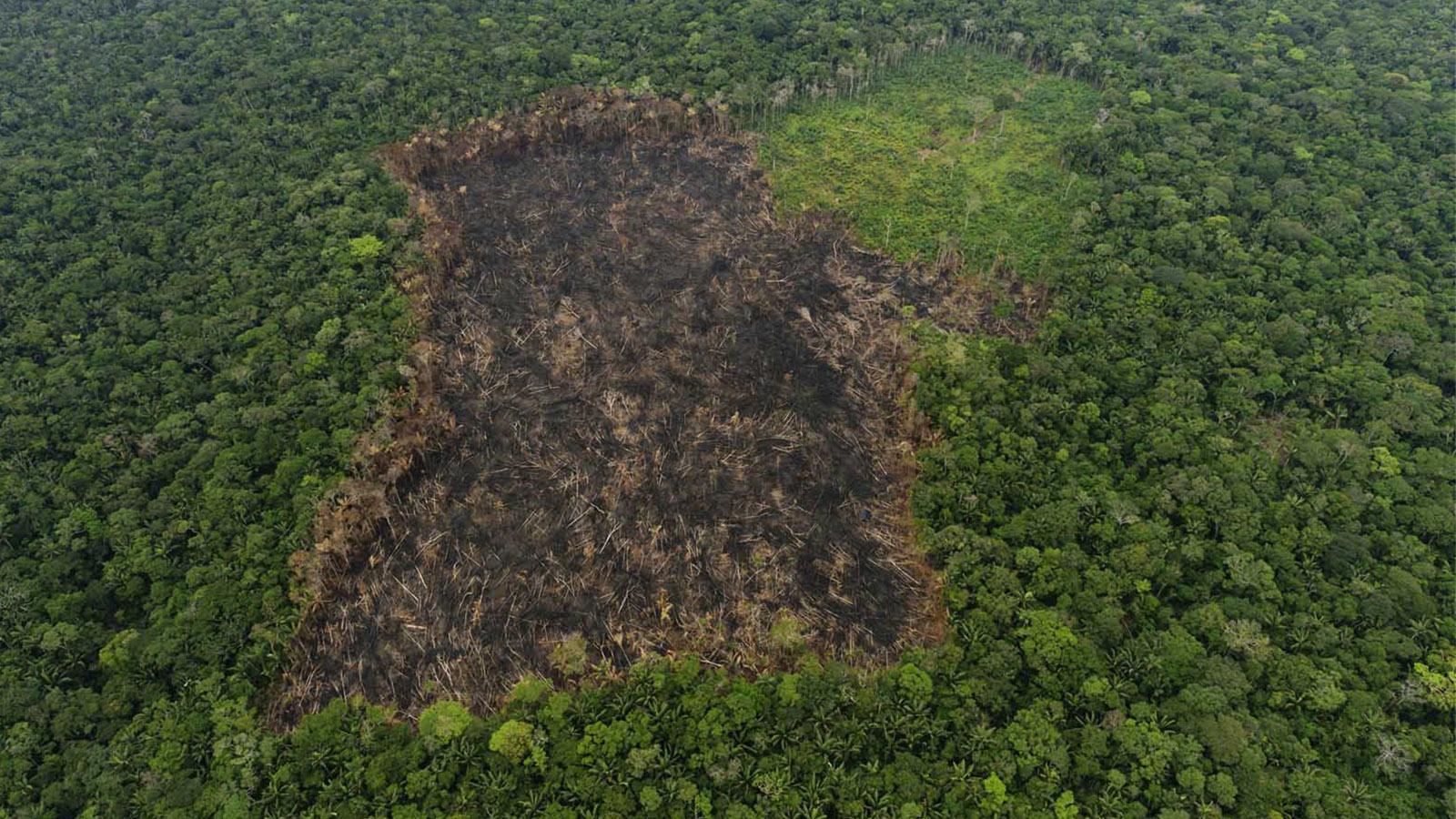 La deforestación amenaza con acabar los bosques del Caguán