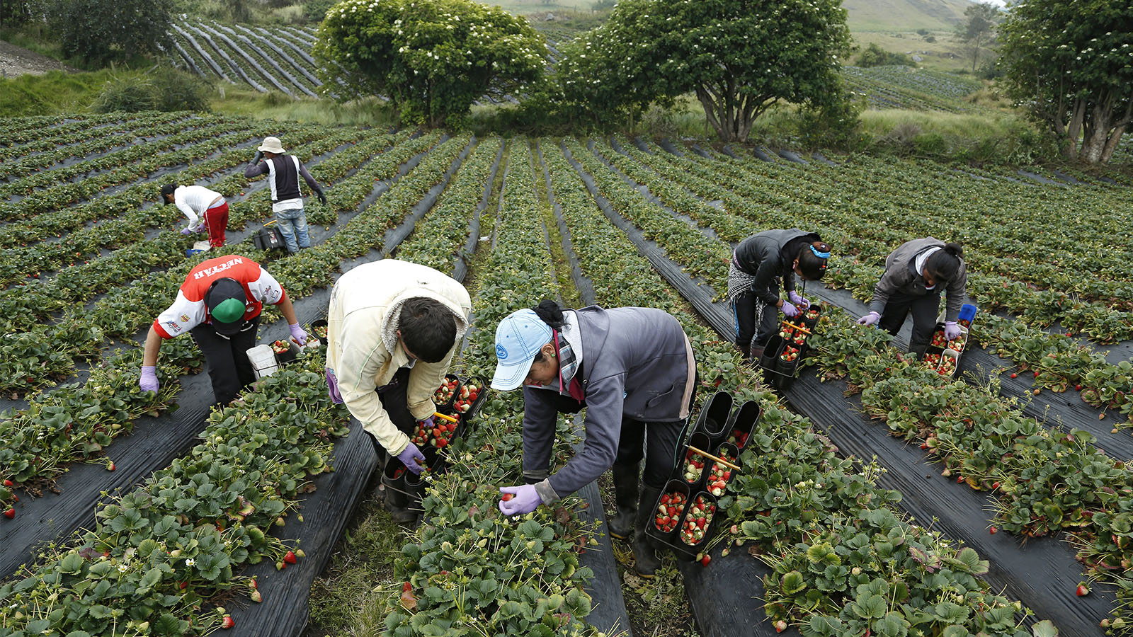 Menos desempleo pero peores condiciones: así es trabajar en el campo colombiano