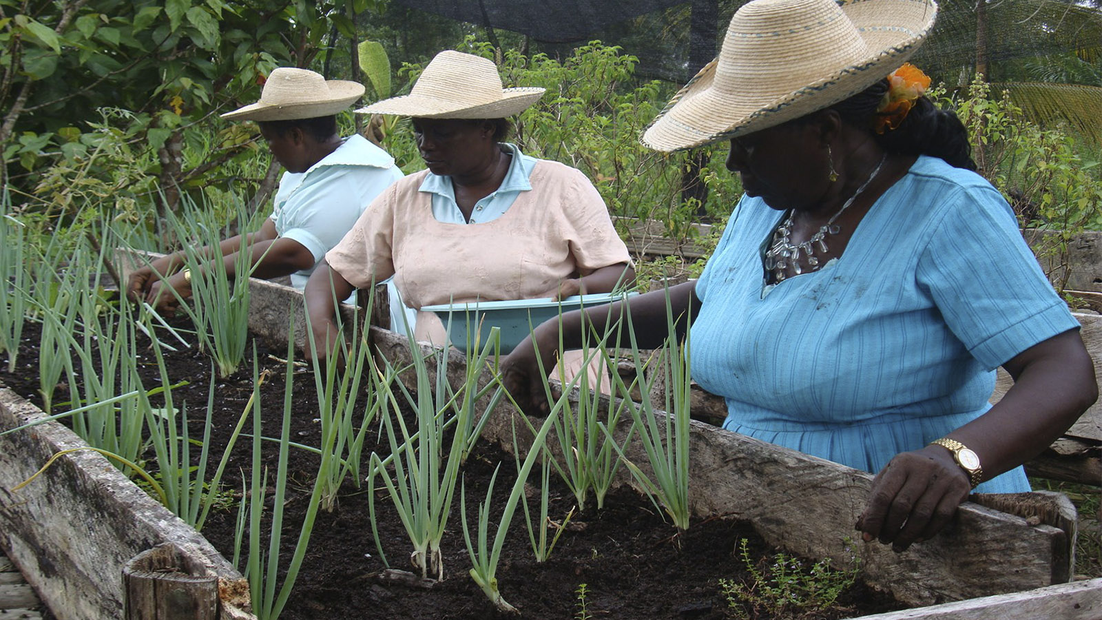 Las mujeres caucanas que recuperaron la tradición de cultivar en azoteas