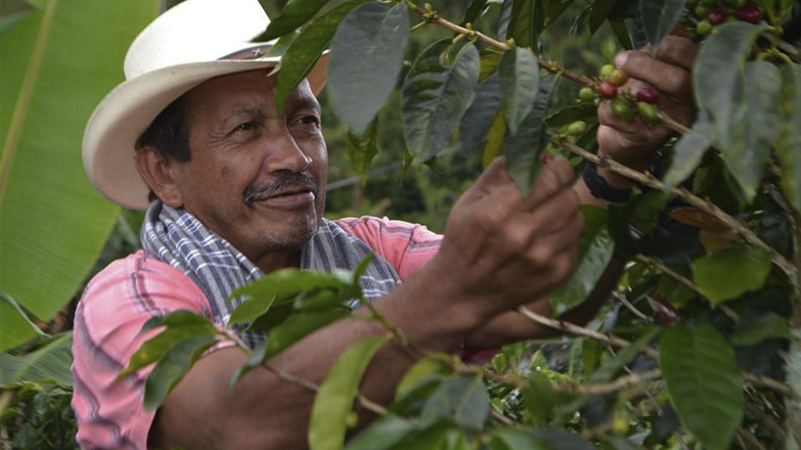 La historia detrás de los cafés especiales de Colombia