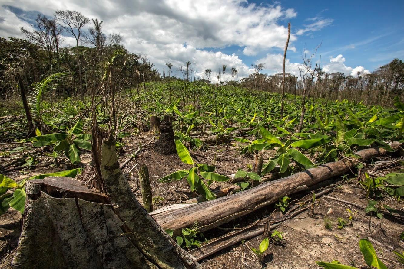 La deforestación del puente amazónico, otra paradoja de la paz