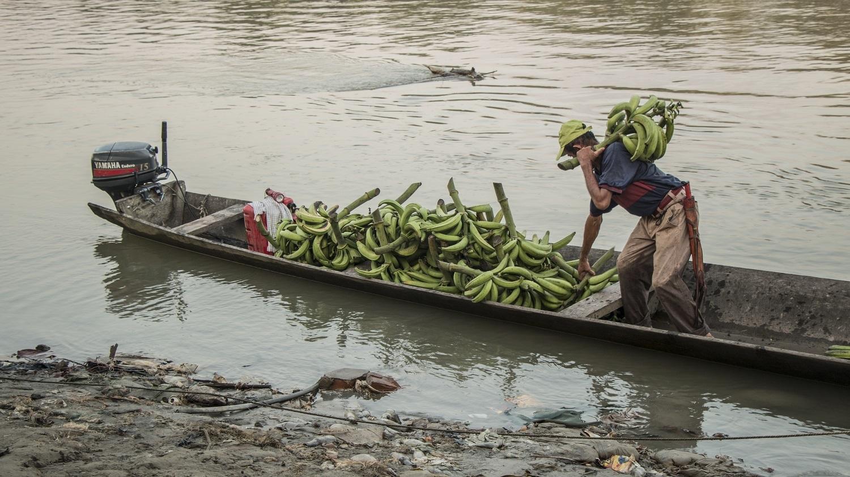 Puerto Rico: de pueblo cocalero a prospecto de despensa agrícola