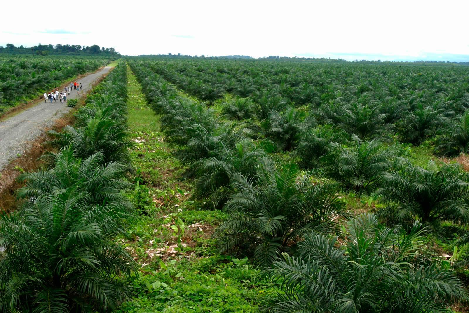 Seguridad alimentaria: una excusa de la agroindustria para expandirse