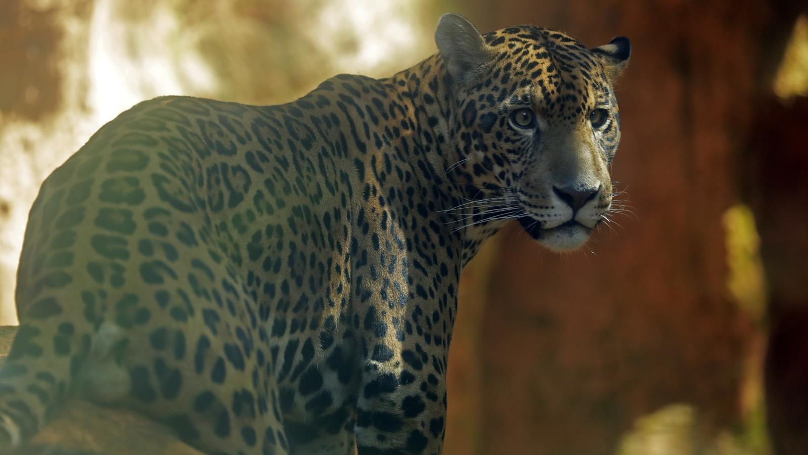 El peso de la sexta extinción en un país biodiverso como Colombia