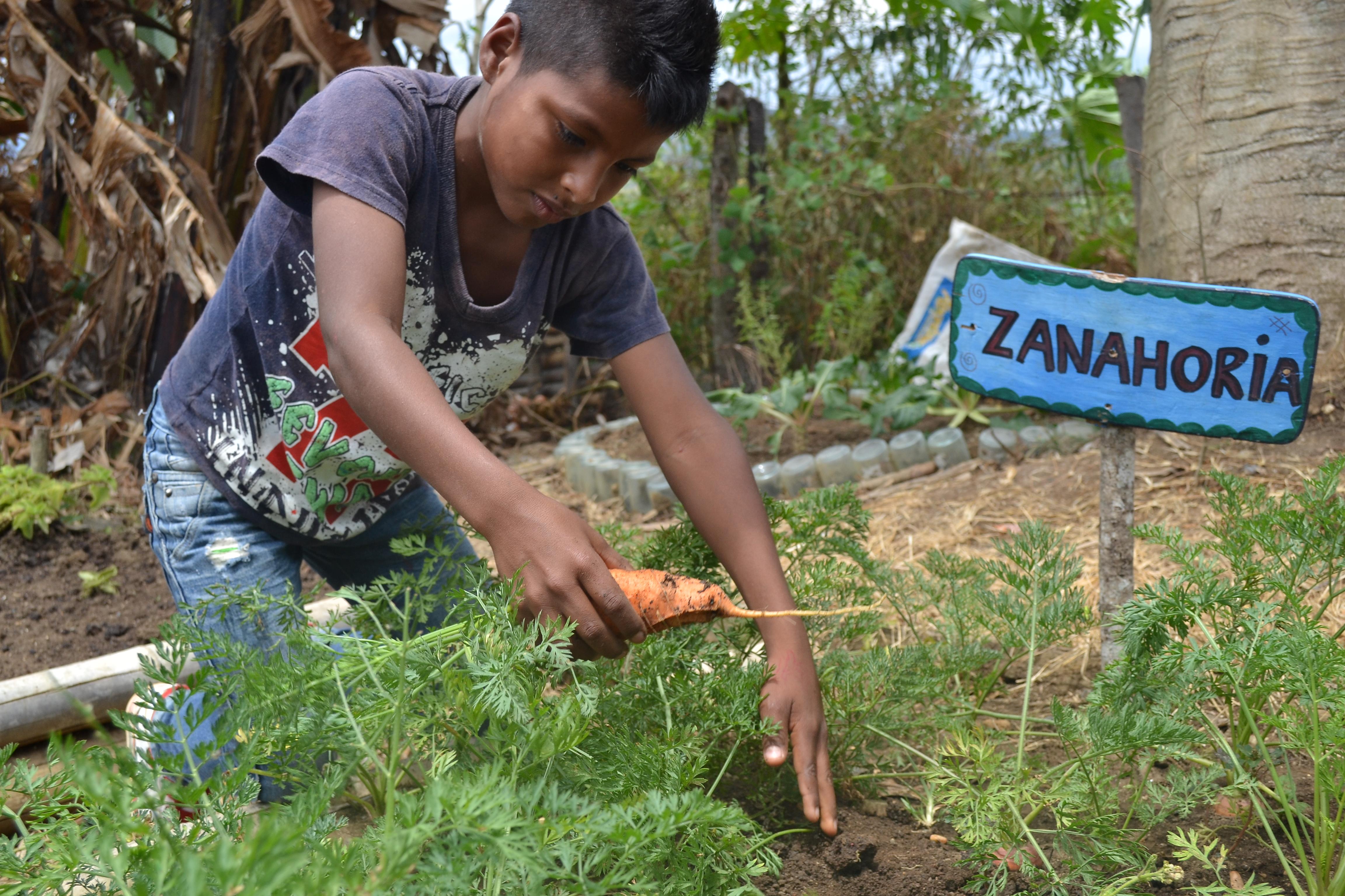 Cultivar para resistir: la huerta escolar que cosecha niños lejos de la violencia