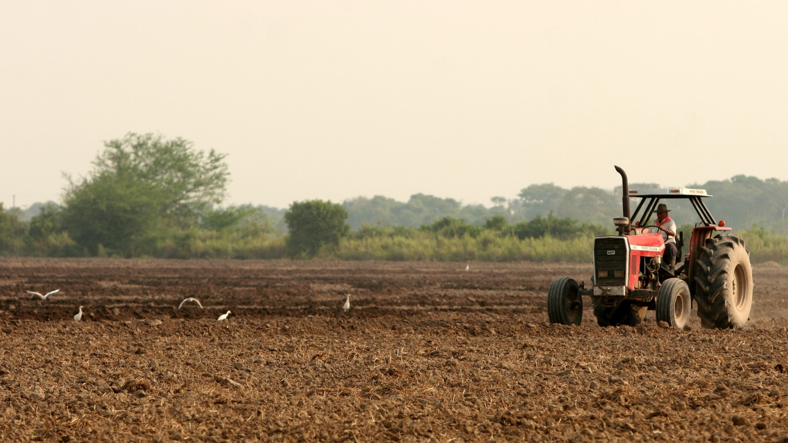 Cinco lecciones de la agricultura holandesa para el campo colombiano