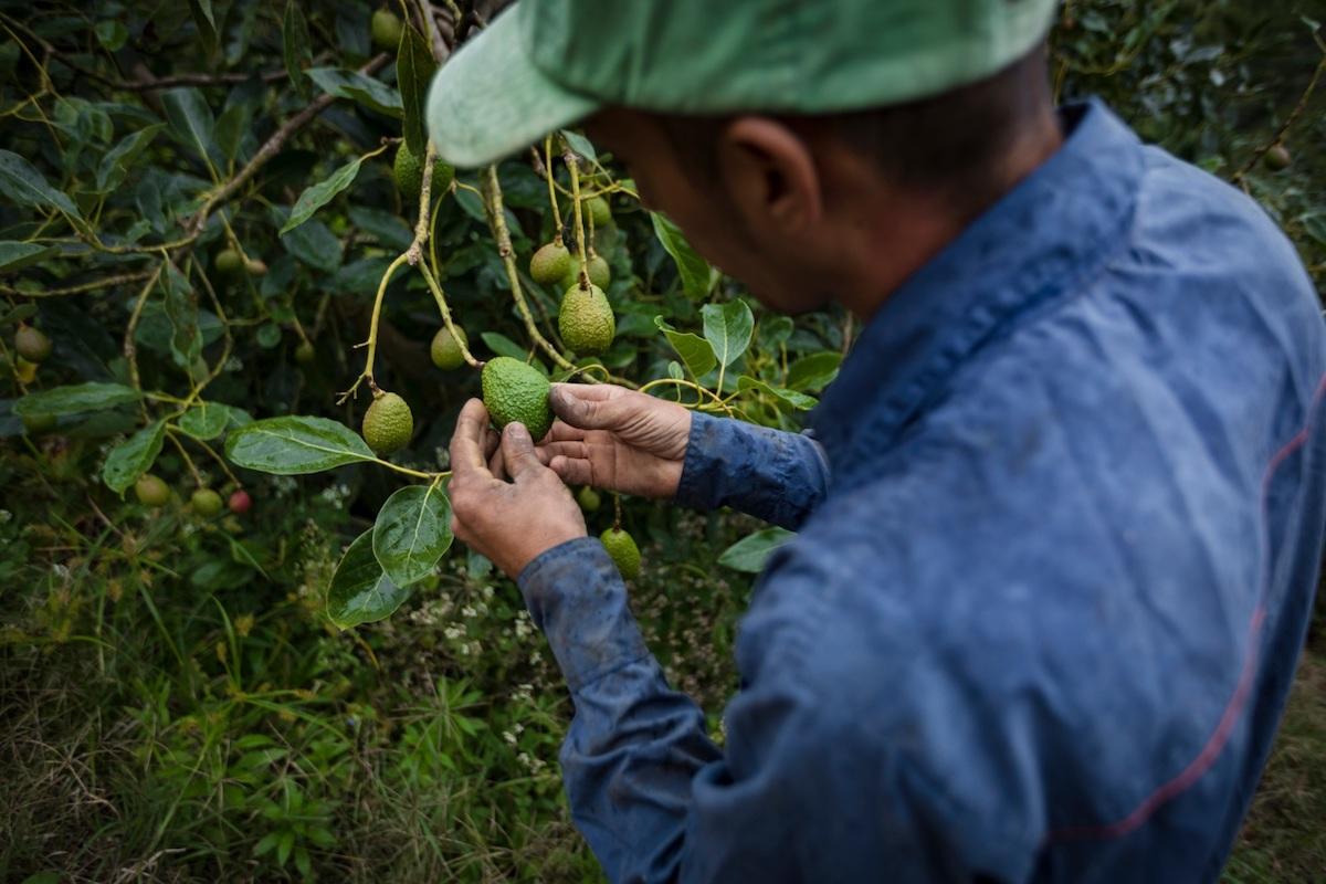 Cuatro problemas del campo colombiano que se quedaron sin resolver en 2018