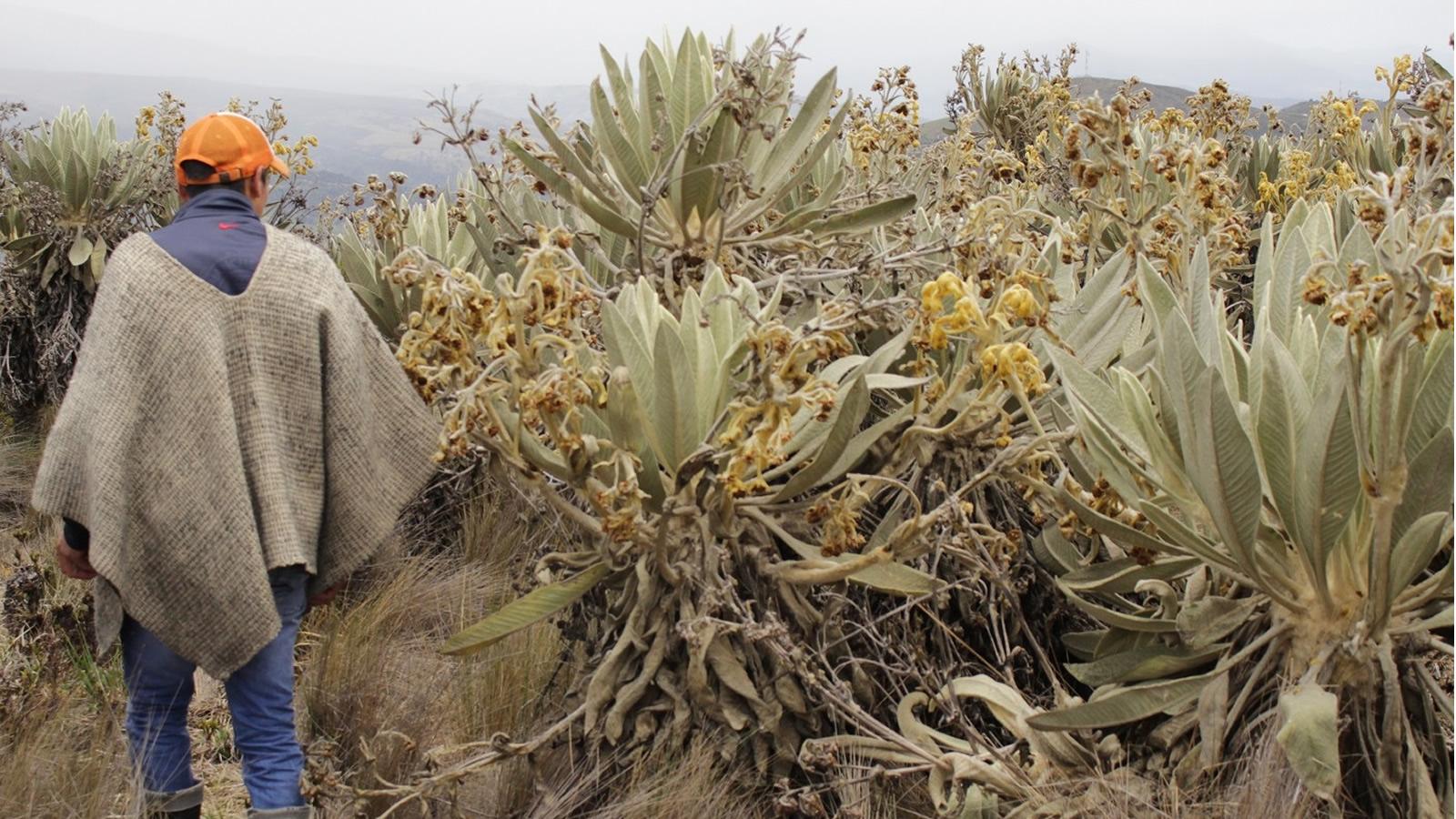 Víctima naturaleza: el conflicto también nos cambió el paisaje