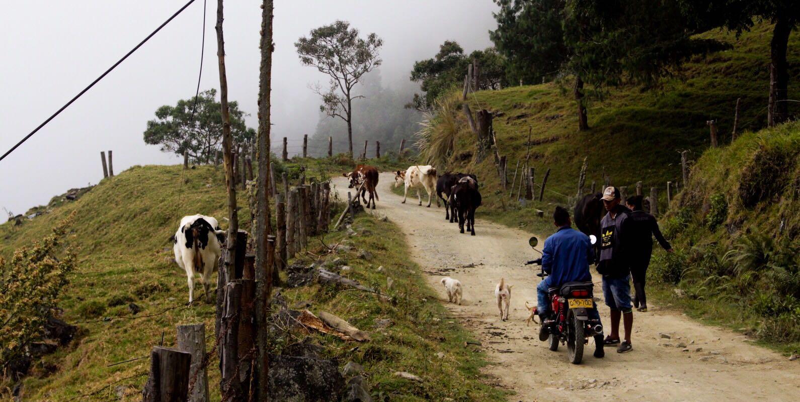 Desminar Pradera: una tarea de campesinos, indígenas y militares