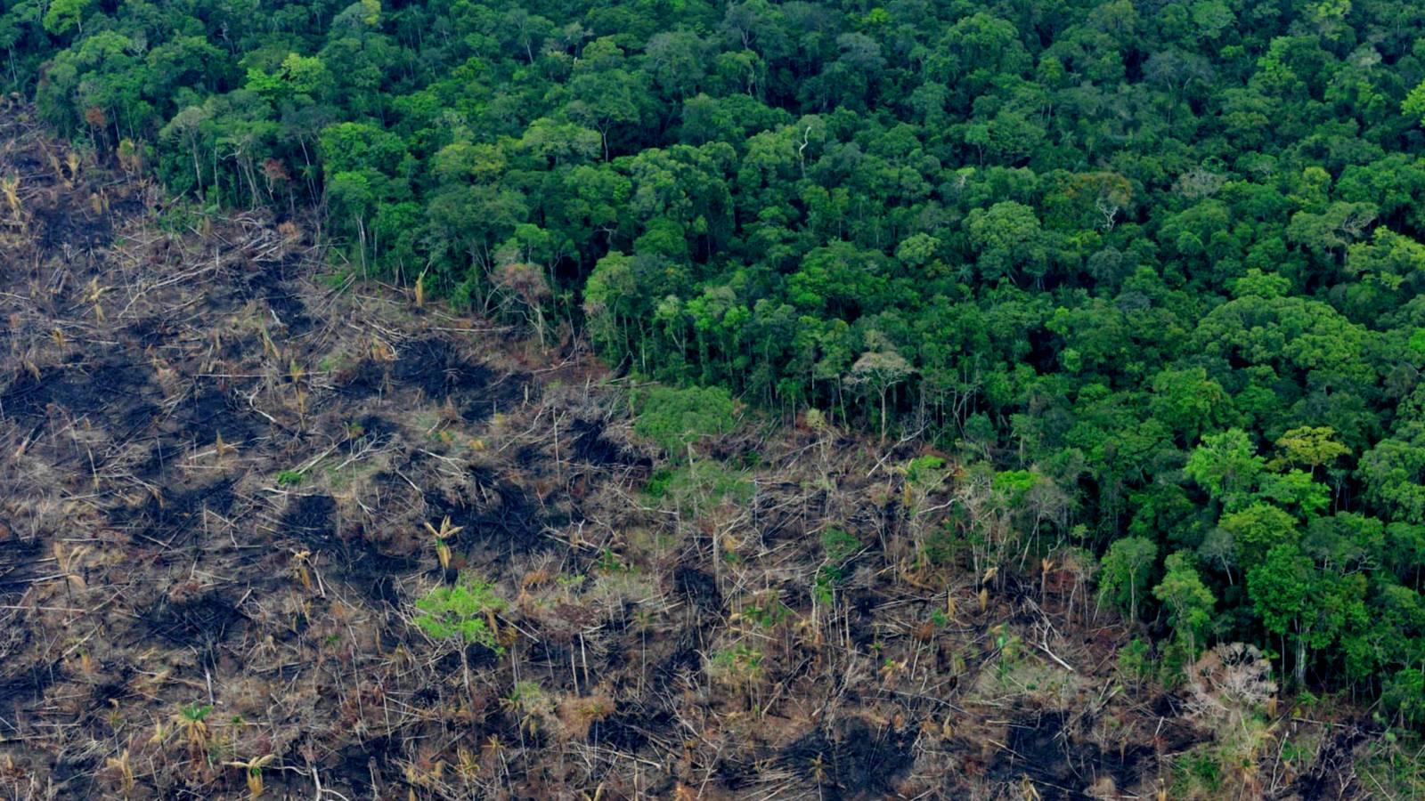 Cinco tareas urgentes para frenar la deforestación en la puerta de la Amazonía