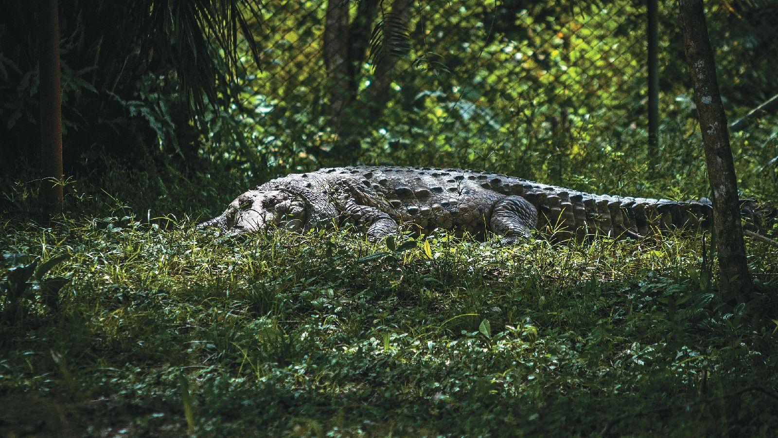 ¿Por qué está tan quedada la investigación de reptiles y anfibios en Colombia?