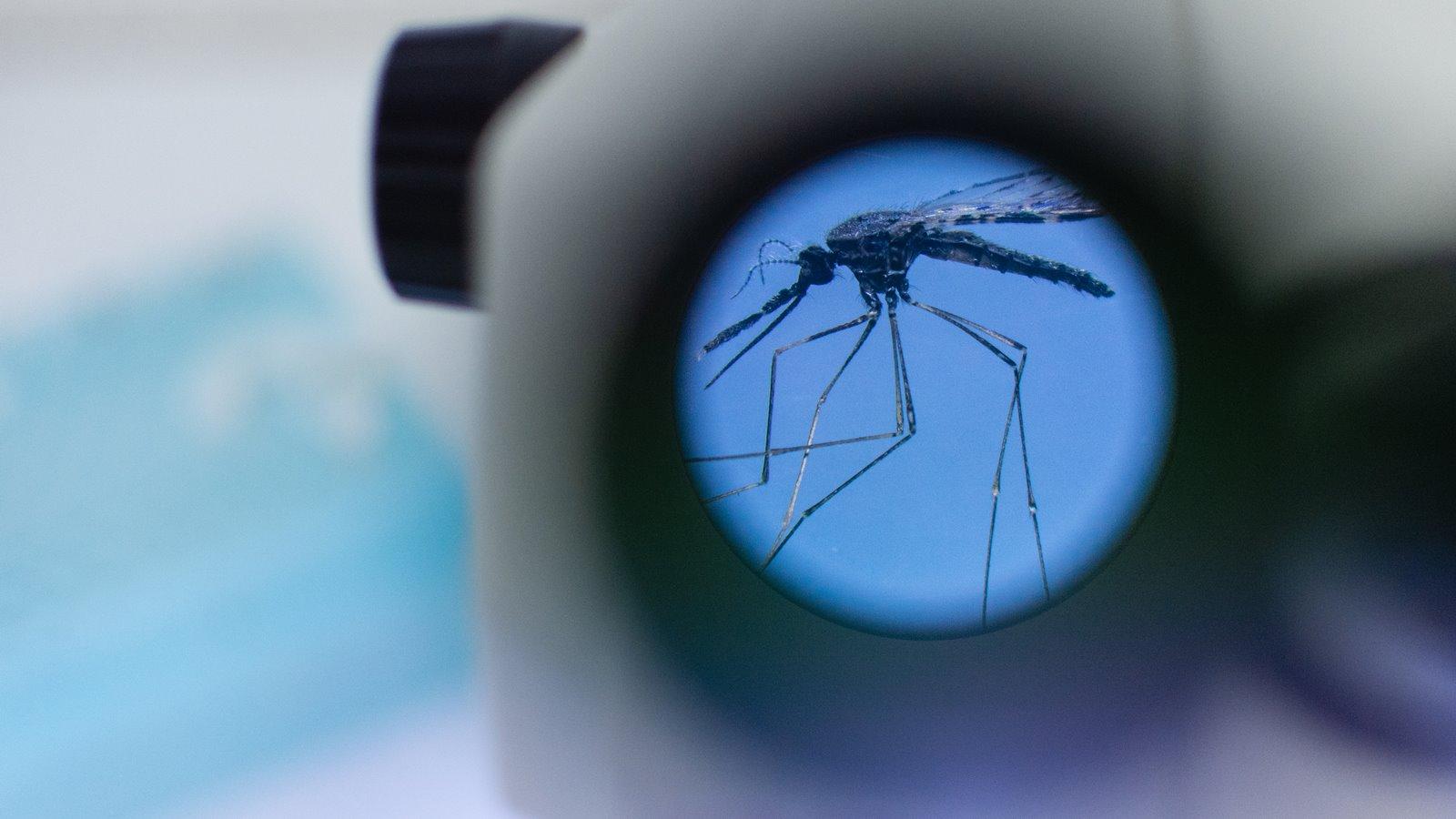 Malaria: el pacífico colombiano contra el animal más letal del mundo
