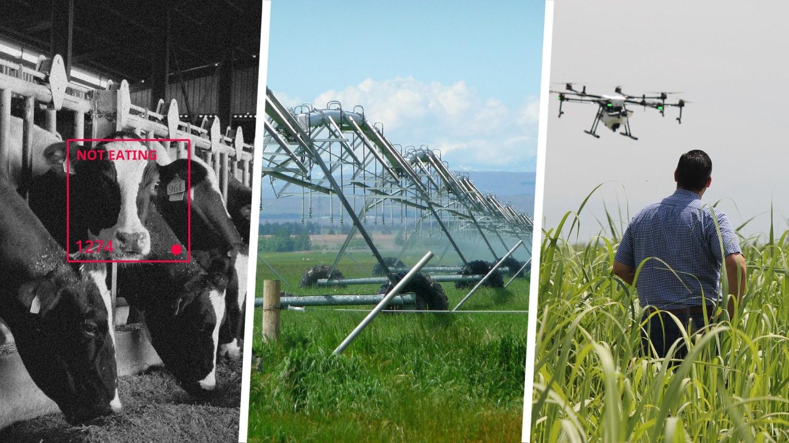 Tres tecnologías futuristas que las fincas colombianas pueden aplicar hoy