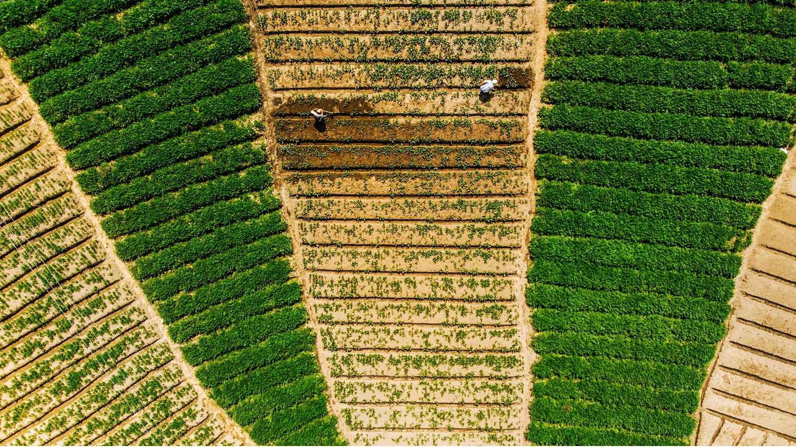 zoom/colombia/fotorreportaje--antioquia-rural-de-coleccion