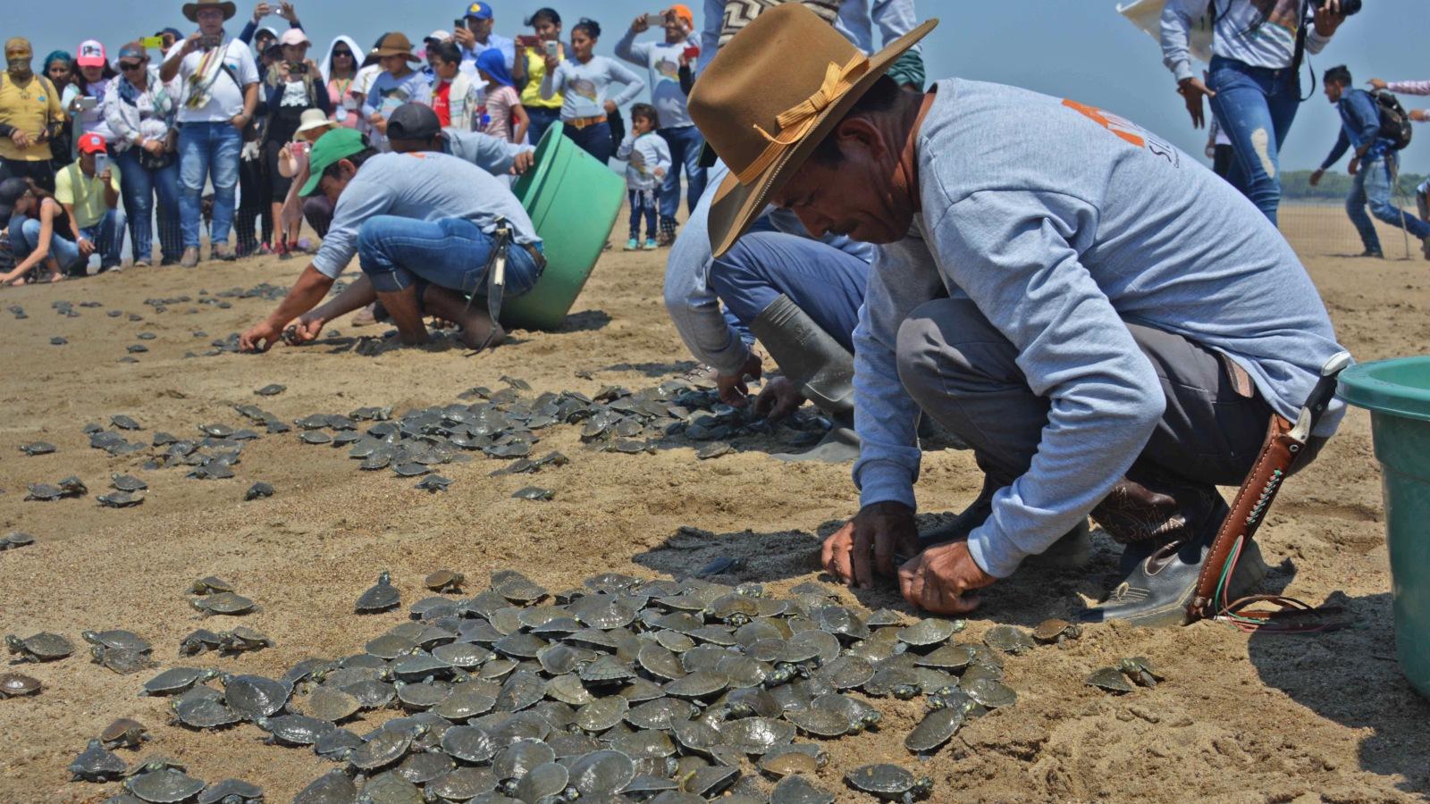 Los palabreros de la tortuga charapa en Arauca
