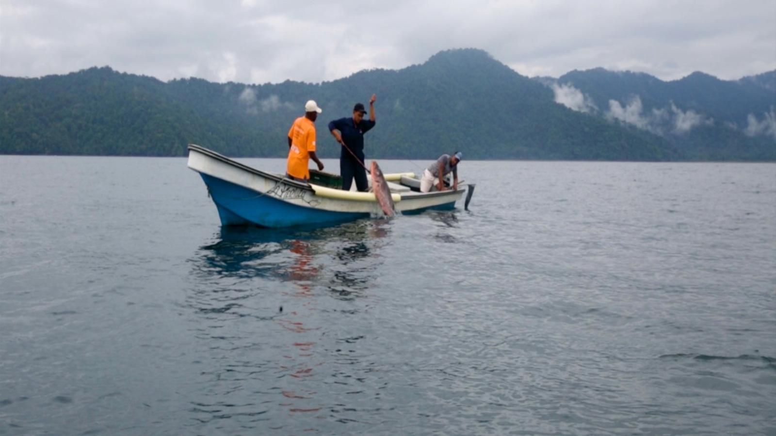 El emprendimiento que está salvando especies en el Pacífico