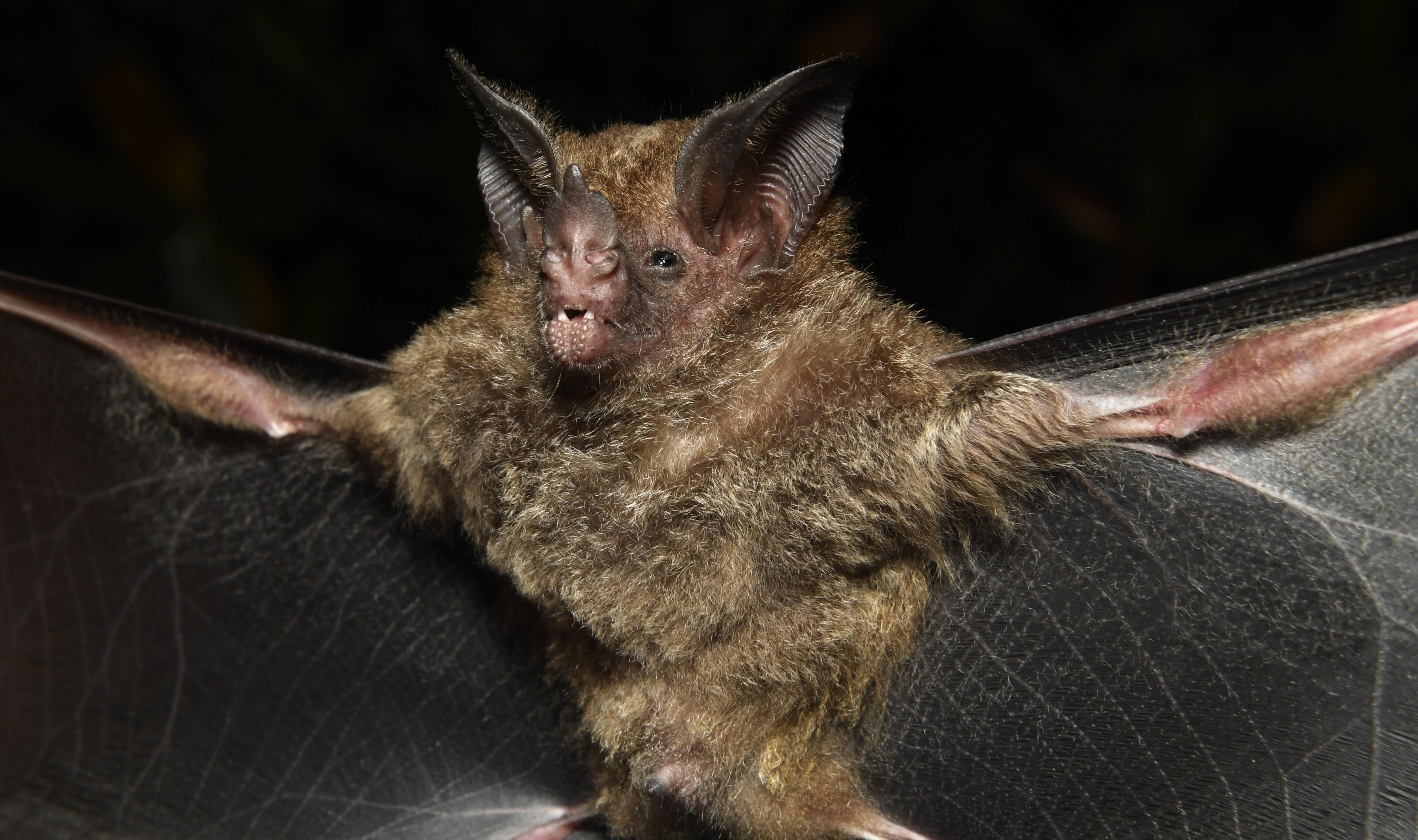 En el Amazonas hallan 36 posibles nuevas especies para la ciencia