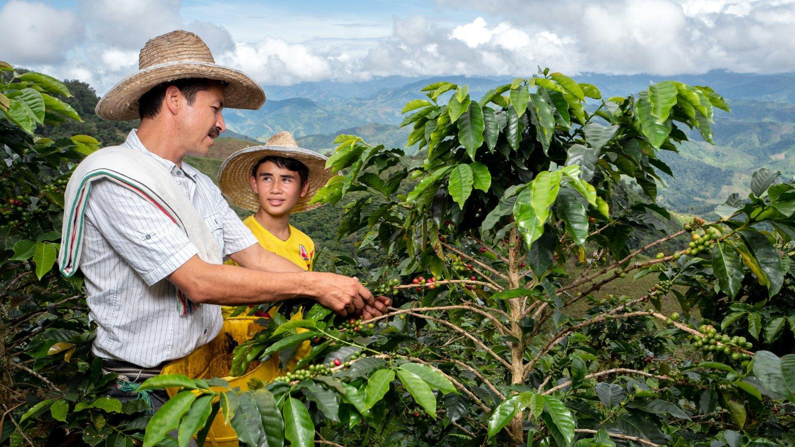 La apuesta de Caquetá por continuar su tradición cafetera