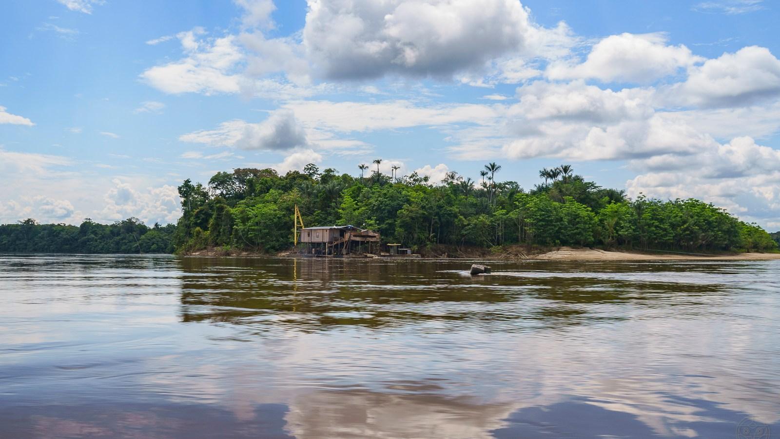 Peces nadan en mercurio en ríos amazónicos