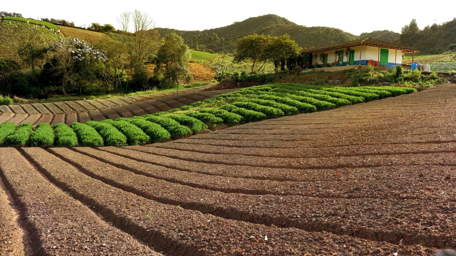 150 millones de dólares para cerrar conflictos por uso de la tierra en Colombia