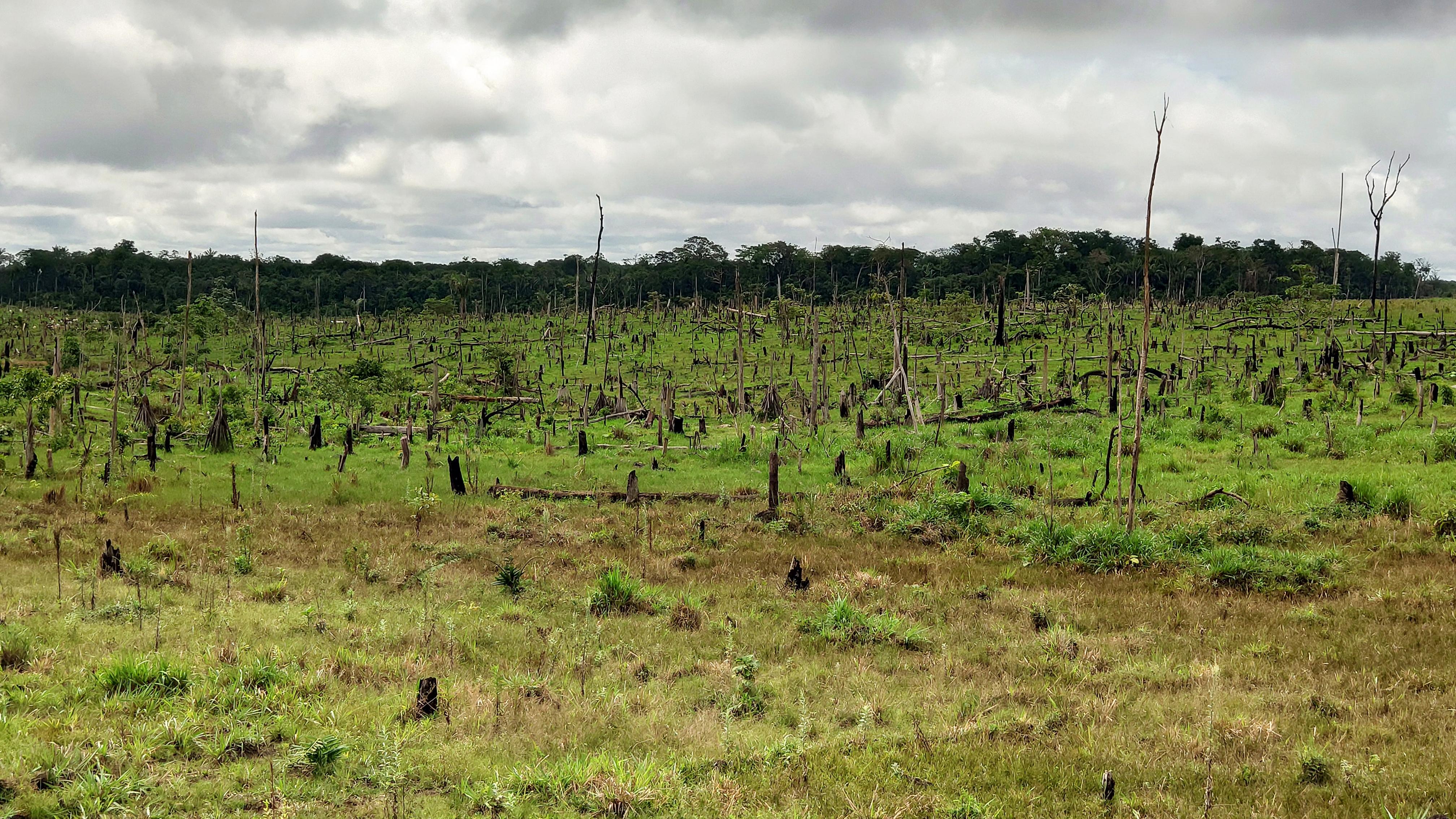 Iglesia católica buscará reconciliar a los colombianos con la Amazonia