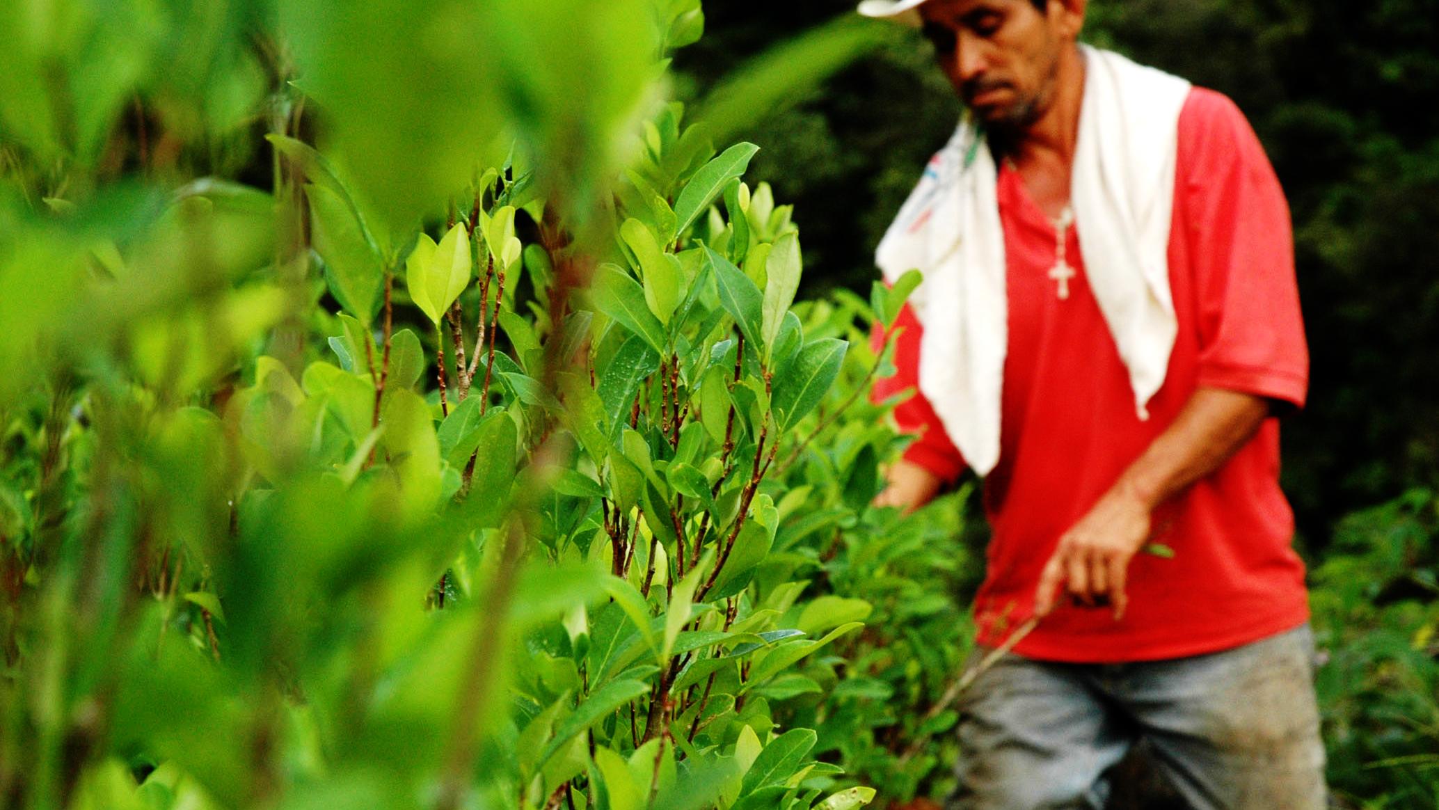 reportajes/caldas/caldas-recibio-certificacion-de-la-onu-como-una-region-libre-de-cultivos-ilicitos