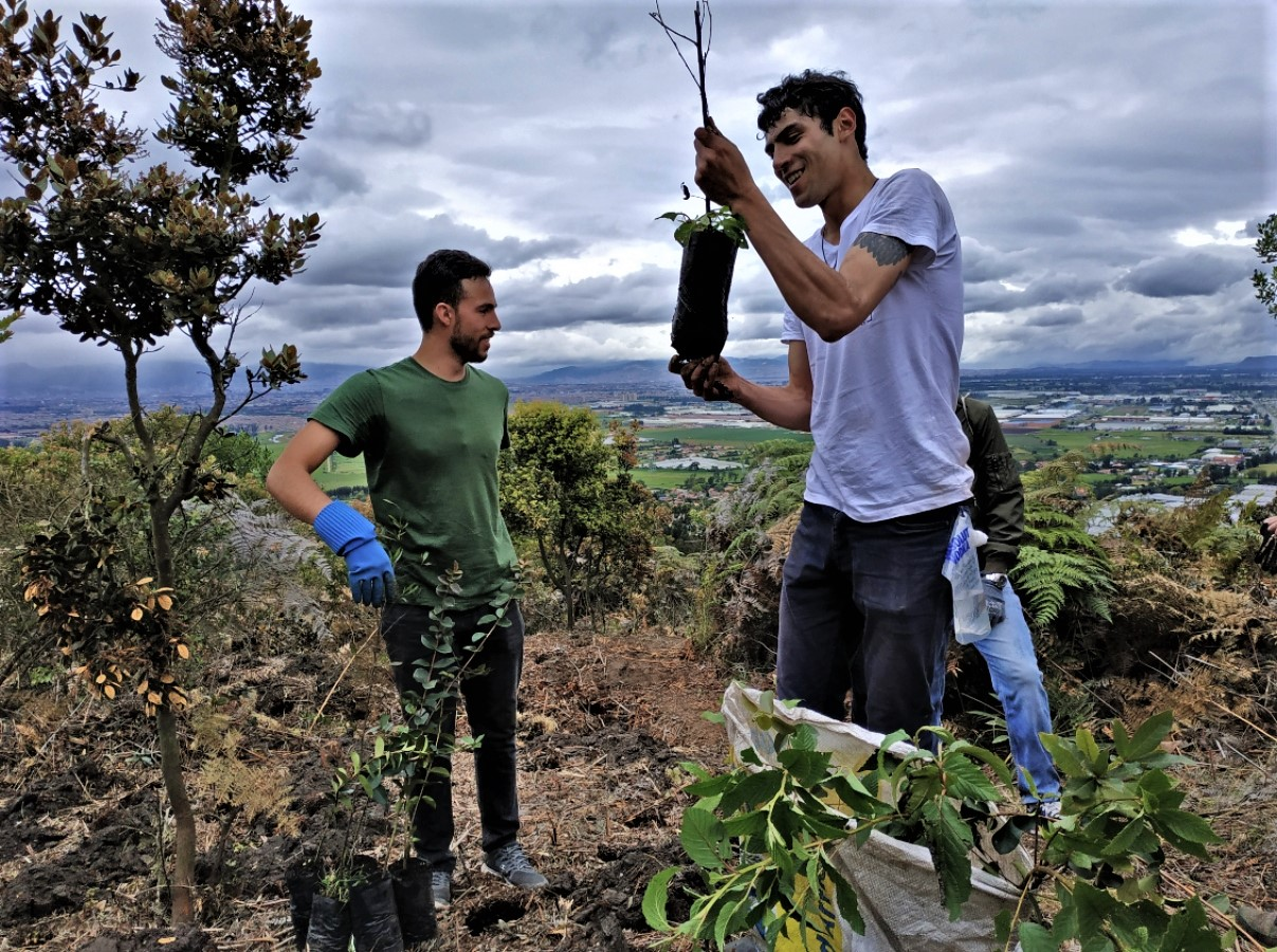Reverdecen el cerro Majuy con cerca de 2.000 árboles nativos
