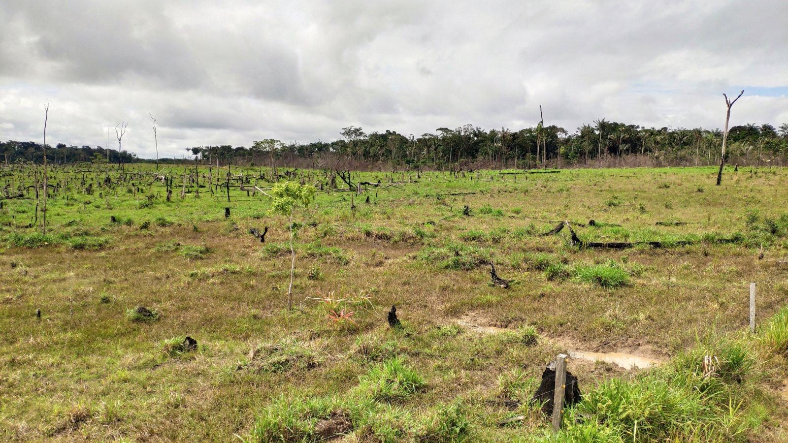 Extensionismo rural, una estrategia para la conservación ambiental en Caquetá
