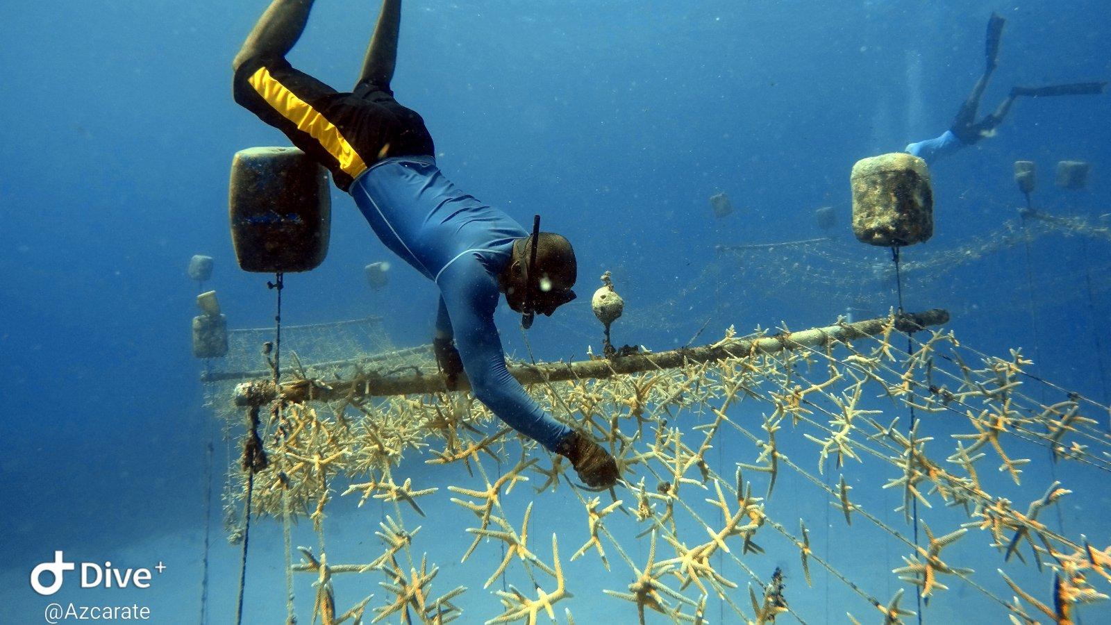 Un salvavidas para los arrecifes coralinos