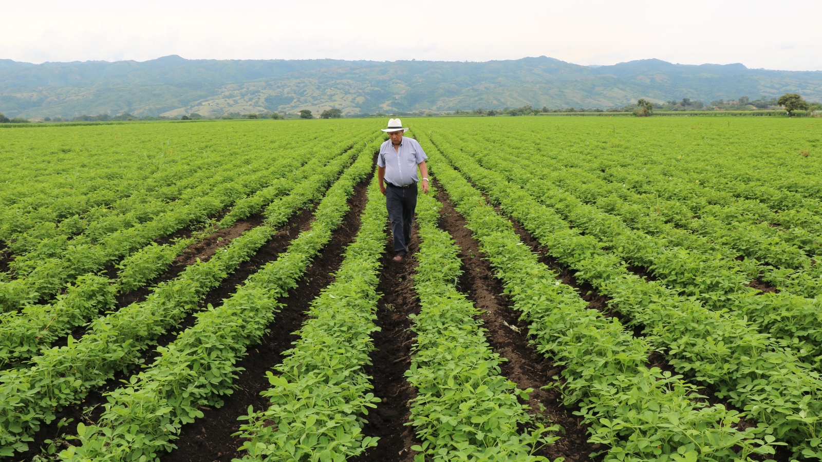 Cumbre Colombia Rural, un espacio para repensar las alianzas productivas