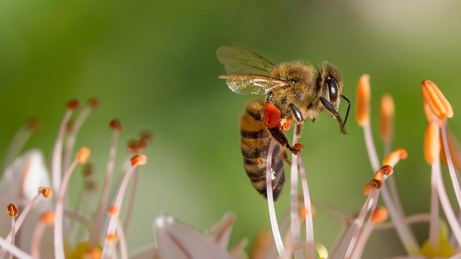 La unión de dos gremios para salvar las abejas y mejorar los cultivos