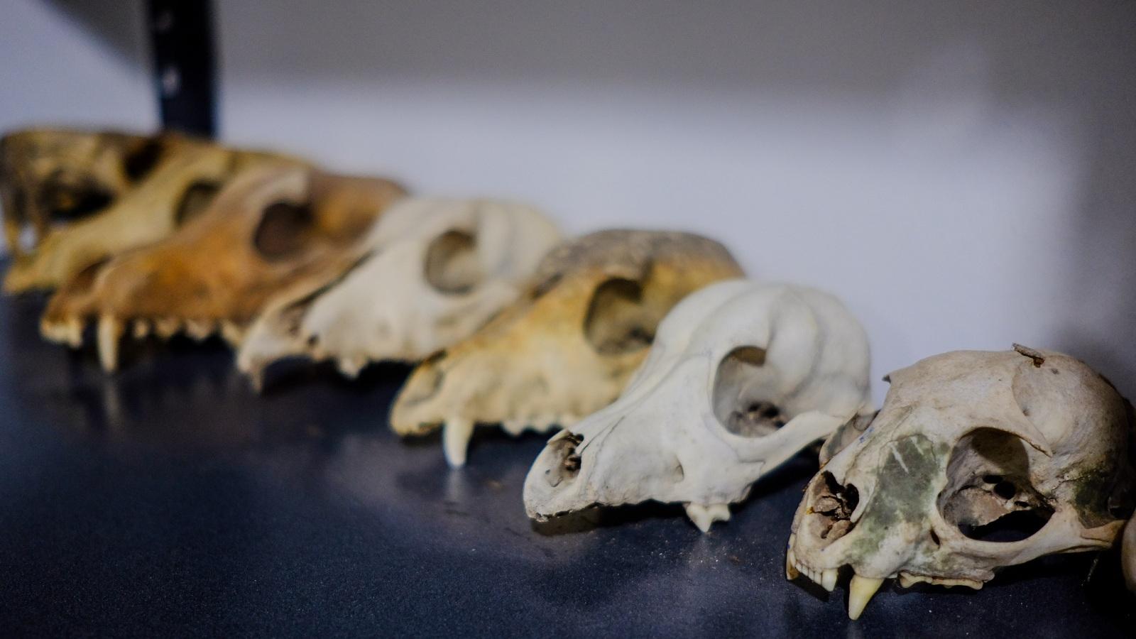 en-zona-rural-del-atlantico-inauguran-el-mupapa-primer-museo-paleontologico-del-caribe--